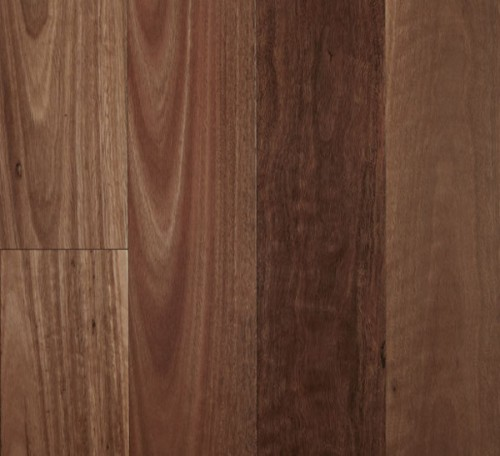 Fiddleback - Spotted Gum Smooth Semi-Gloss